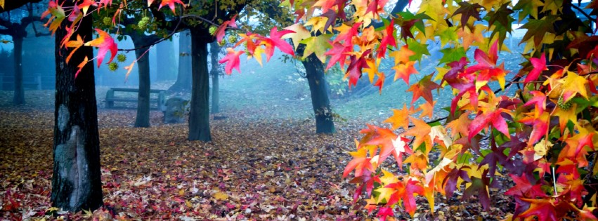 Colourfull leaves FB HD cover photo